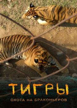 Тигры: Охота на браконьеров